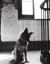 Barcelona 1990, Dog in Stairs, Black & White Photo, Barcelona