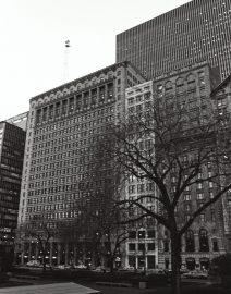 Chicago Tree & Buildings Michigan Avenue